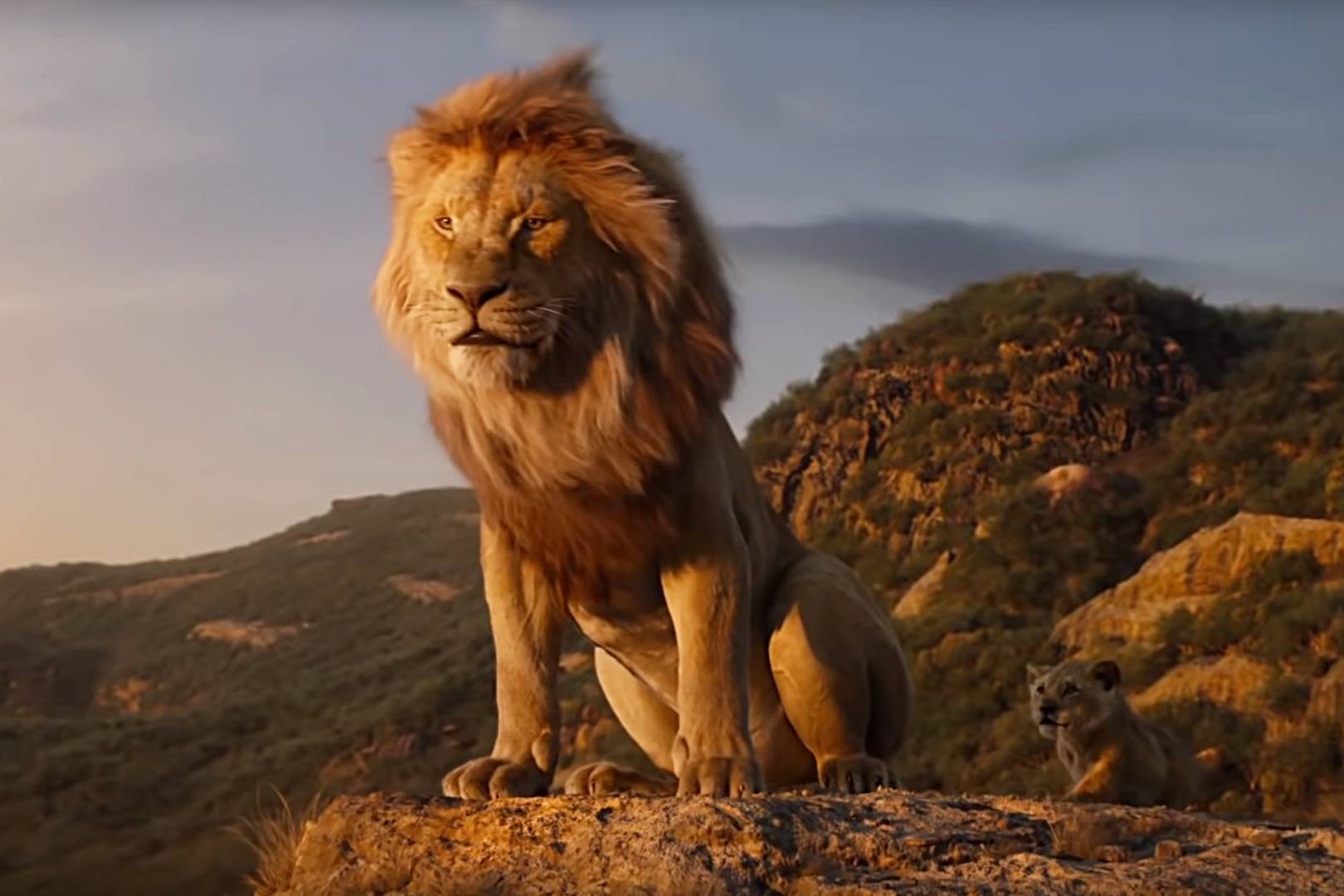 disney launches protect the pride campaign saving lions in